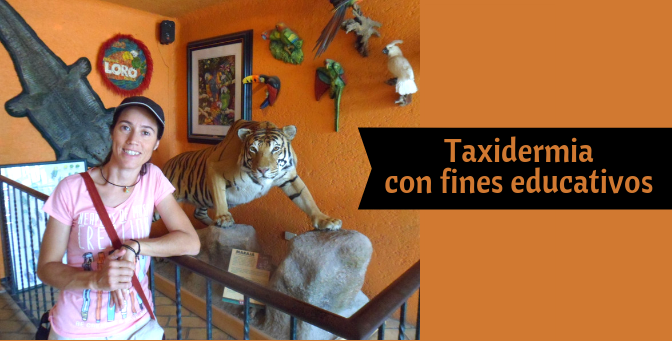 Taxidermia con fines educativos