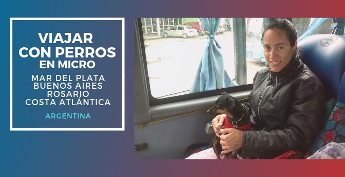 Viajar con perros en micro en Argentina