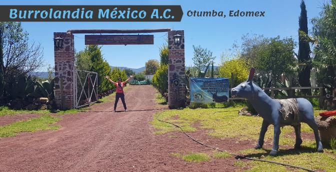 Burrolandia México A.C. – Proyecto de Rescate del Burrito Mexicano