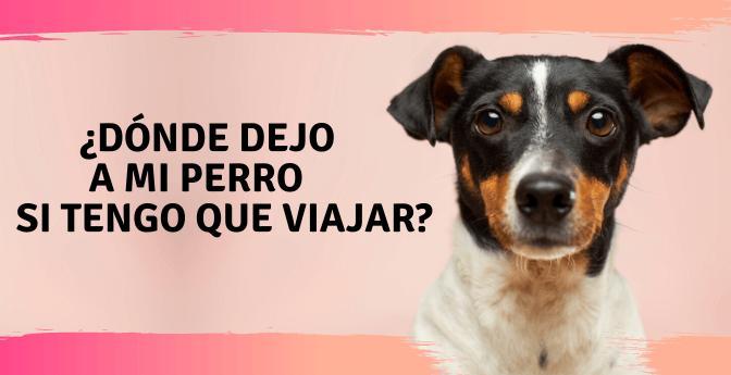 ¿Dónde dejo a mi perro si tengo que viajar?