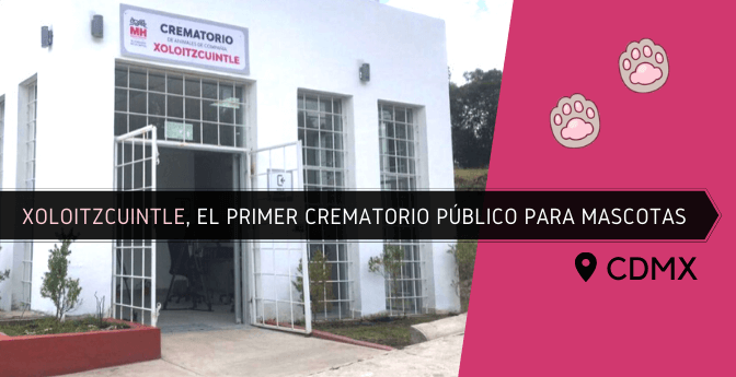 Xoloitzcuintle, el primer crematorio público para mascotas en CDMX