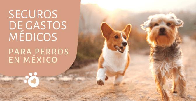 Seguros de gastos médicos para perros en México