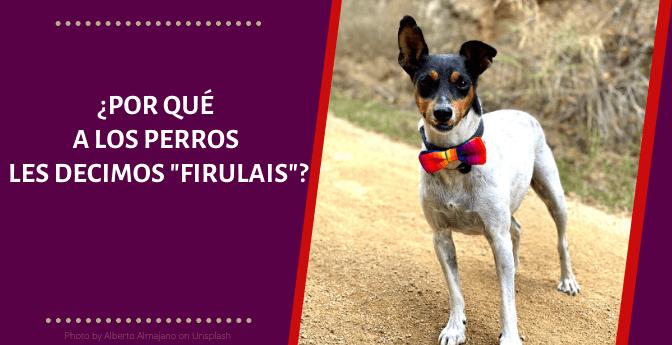Por Que A Los Perros Les Decimos Firulais Pata De Perro